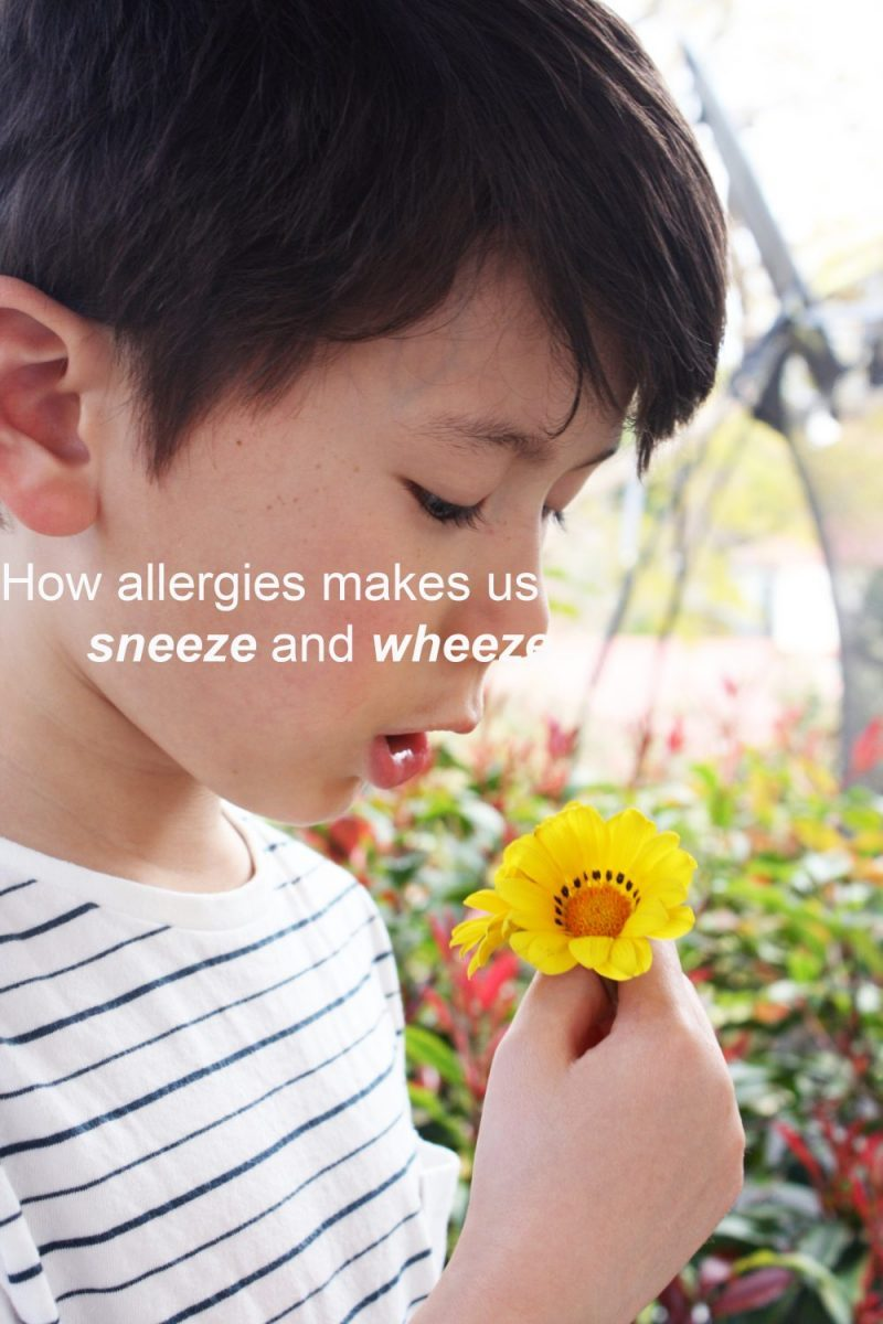 How allergies makes us sneeze and wheeze